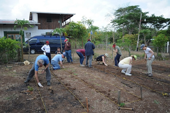 Volunteers plant demonstration plots