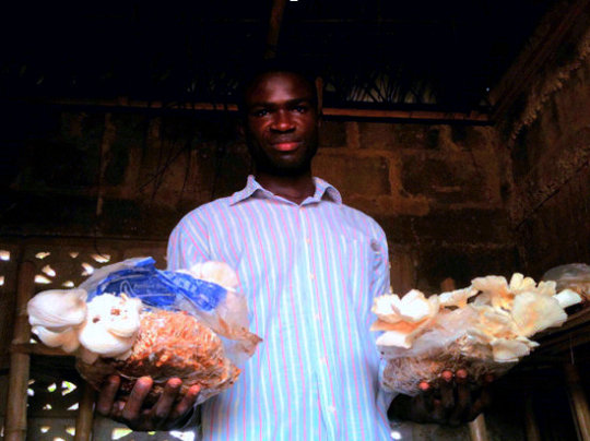 Solomon Puts Agriculture Waste to Productive Use